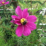 Garden_aug_11_011
