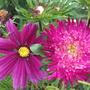 Garden_aug_11_012