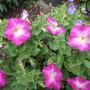 Garden_aug_11_015