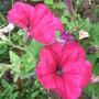 Garden_aug_11_034