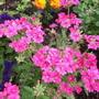 Garden_aug_11_004