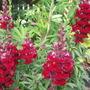 Garden_aug_11_014
