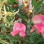 Garden_aug_11_024