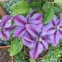 Garden_aug_11_019