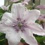 Garden_aug_11_018