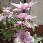 Garden_aug_11_020