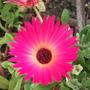 Garden_aug_11_013