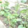 My Little Cottage garden Update photo :)