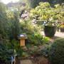 Garden_24th_aug_2011_001