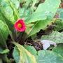 Garden_pics_2011_002_24_