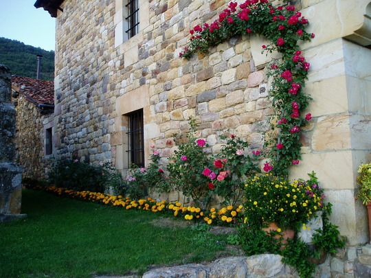 Climbing Rose and Marigolds in Cahecho