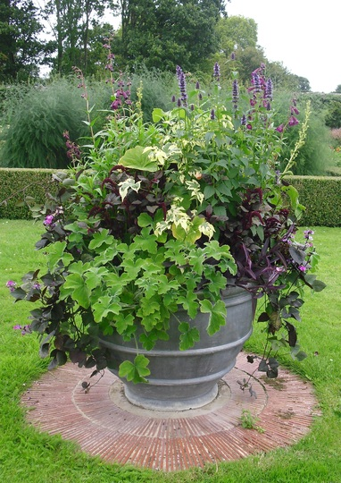 Large potted urn