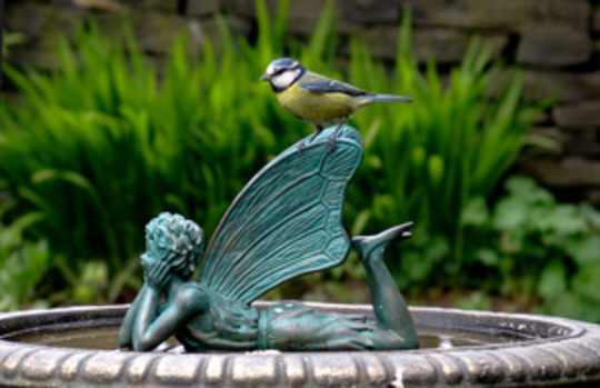 Blue tit on bird bath