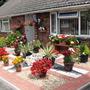 Front_garden_2011_001
