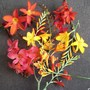 A collection of Crocosmias!