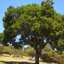 Balboa_park_08_29_11_1_