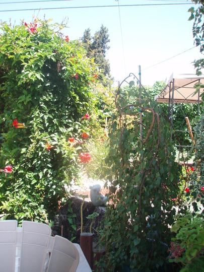 Summer overgrowth!