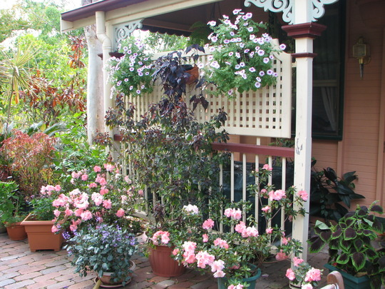 Early Spring in N.E. Downunder - Courtyard Garden