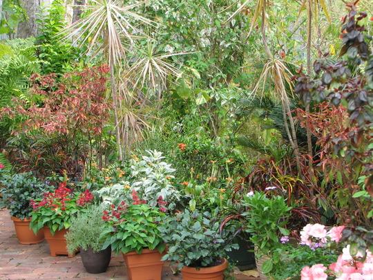 Early Spring in N.E. Downunder - Courtyard Garden