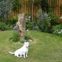 Molly s Garden