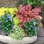 New_flower_tub_lp