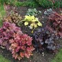 Heuchera and Heucherella bed its in full sun and they seem to love the postion (Heucherella)