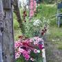 Dianthus, Snapdragons, Delphinium