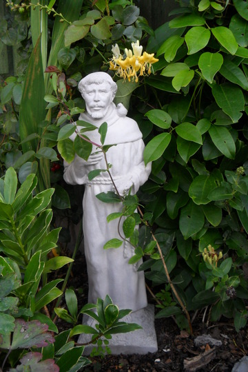 St.Francis with Lonicera Sweetscentation overhead