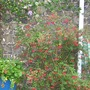 Garden_007