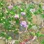 Garden_006