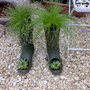 Wellies (Isolepis Cernua)