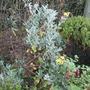 My_garden_011