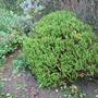 My_garden_014