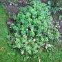 My_garden_012