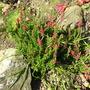 My_garden_016