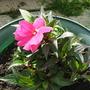 My_garden_025