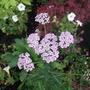 Garden_sep_11_009