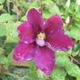 Garden_sep_11_014