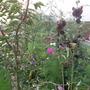 Garden_sep_11_022