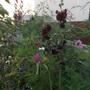 Garden_sep_11_023