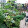 Back Garden - In the rain