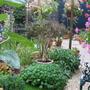Back Garden 2....Still Raining