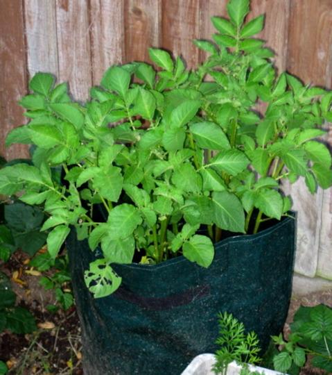 Potato bags - Nadines May 2008