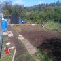 Allotment 12th september