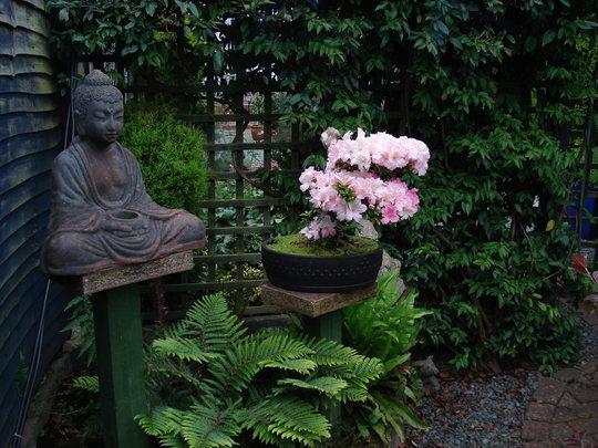 Bonsai area.