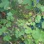 Garden_may_2008_09