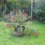Fuchsia new