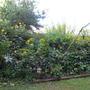 Back Garden in Fall
