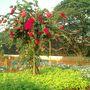Hanging_gardens3.2007_003