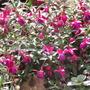 So many flowers